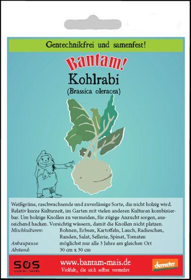 Bantam Kohlrabi in