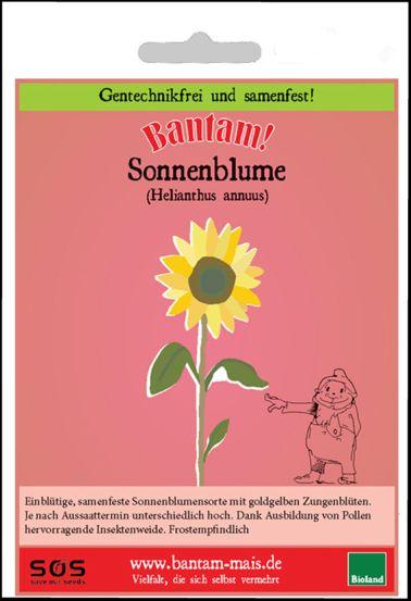 Bantam Sonnenblume in